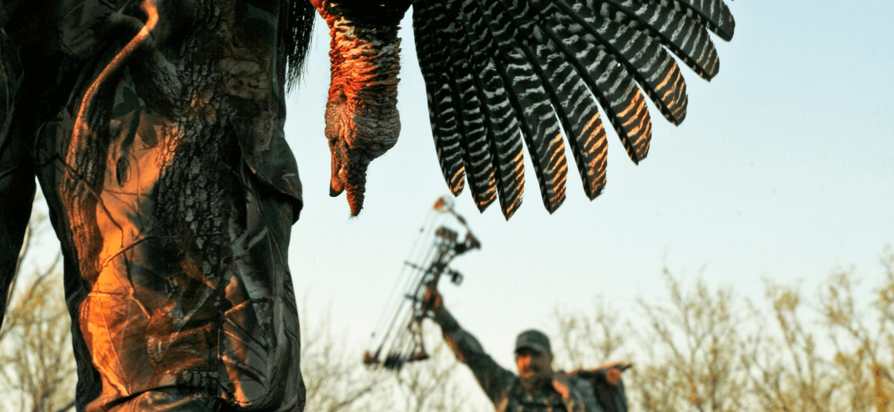 Turkey Hunter Carrying Dead Turkey While Turkey Hunting