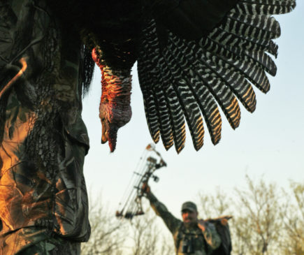 Turkey hunting regulations by state | Wasp Archery