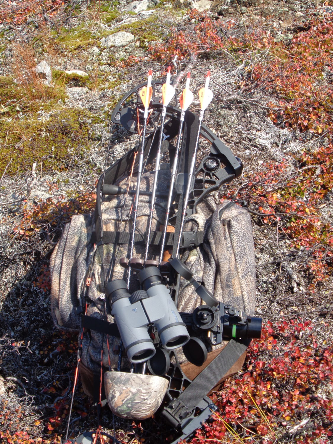Wasp gear for Greenland hunt