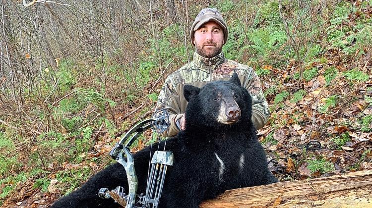 The best broadhead for bears