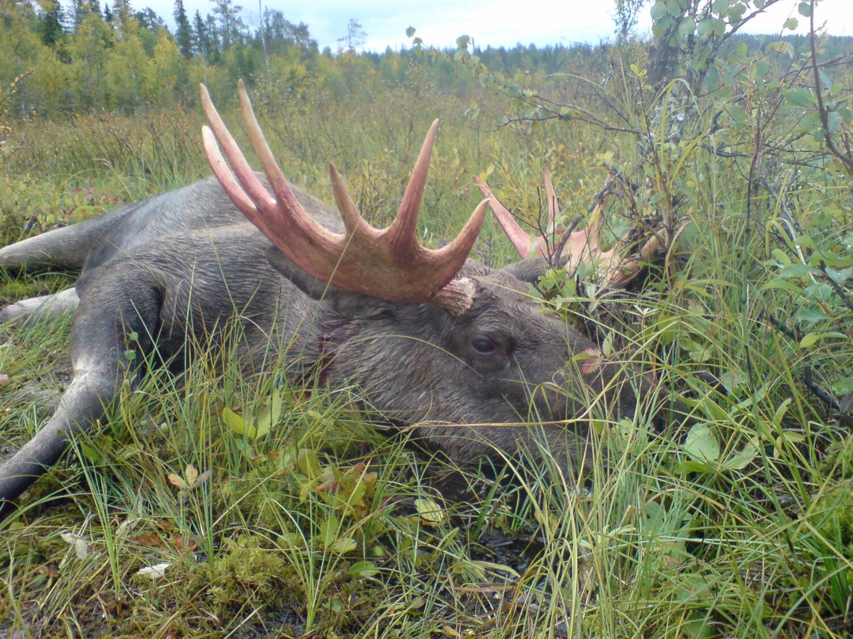 The best broadhead for elk & moose