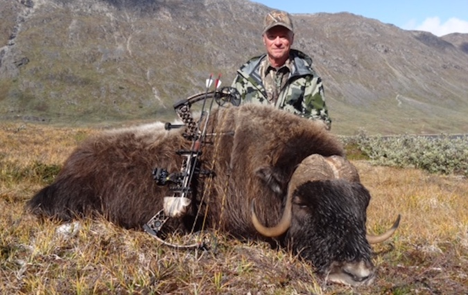 The best broadhead for musk ox & bison